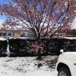 季節外れの大雪!